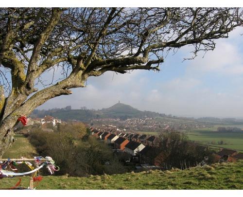 Holy Thorn - Glastonbury