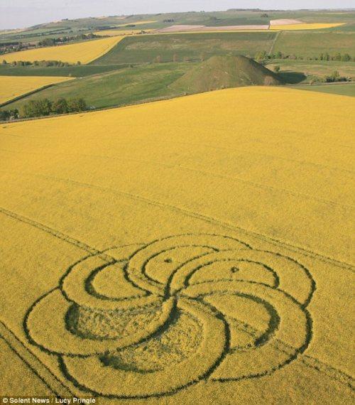 crop-circle-avebury