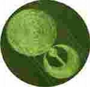 Stonehenge crop circle