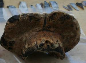 aurochs bones Amesbury
