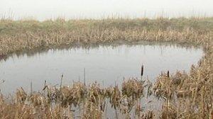Defra said establishing dewponds would encourage birds, newts and other amphibians