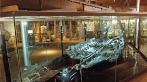 The preserved Bronze Age Boat in Dover Museum Credit: Dover Museum