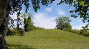 Bronze Age burial mounds rise among beech trees at King Barrow Ridge